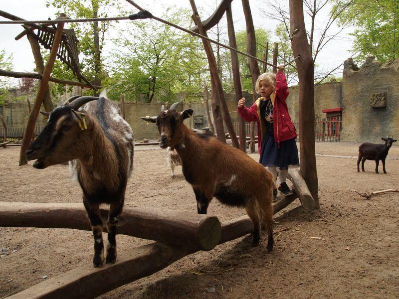 dierentuin Osnabrück