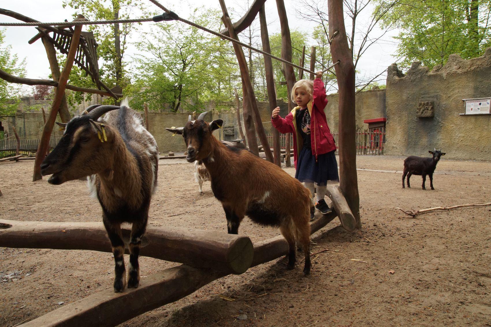De dierentuin in Osnabrück