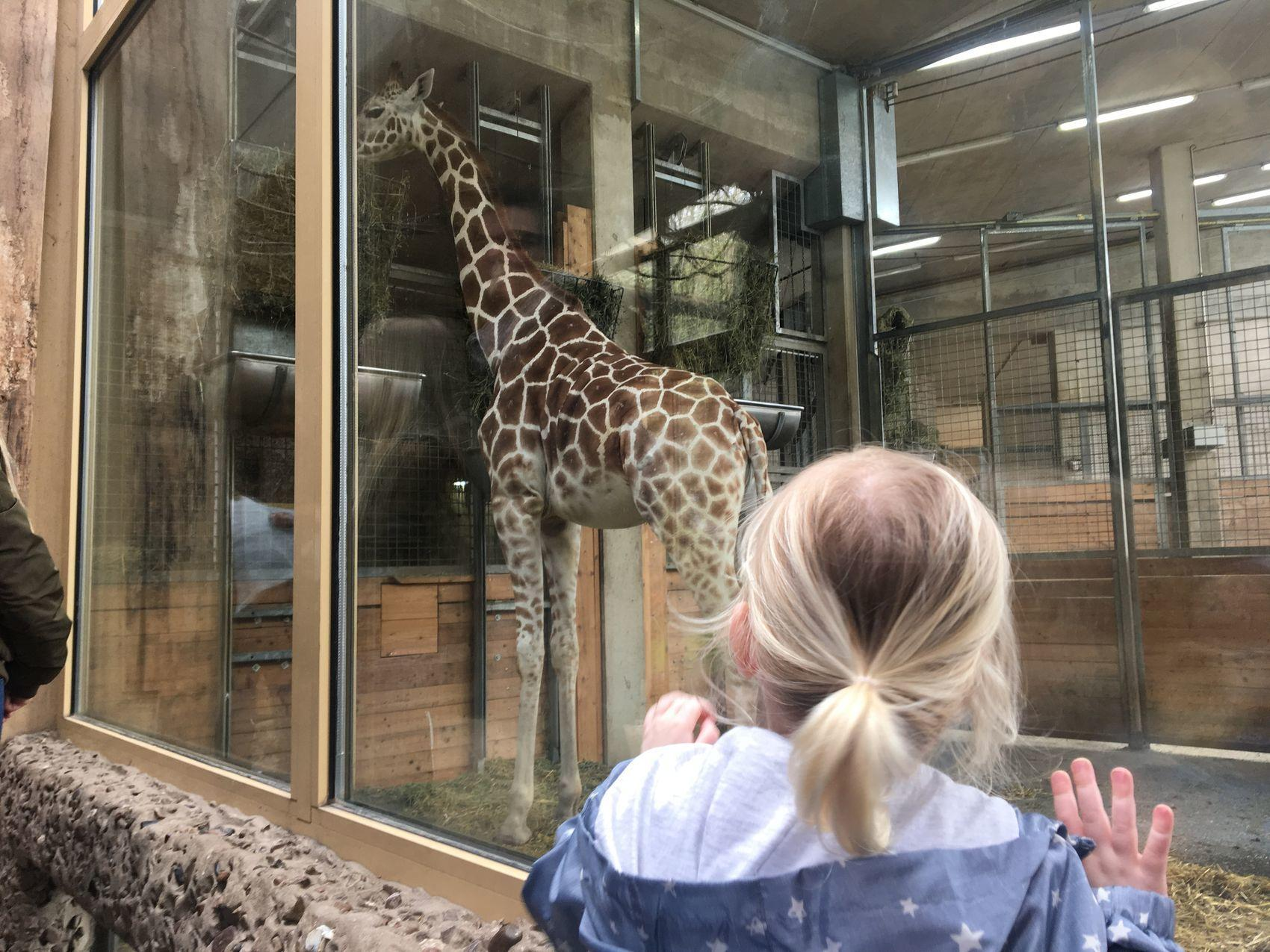 Leuk familieuitje: de dierentuin Osnabrück